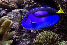 Hawkes Bay-National Aquarium of New Zealand