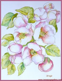 Apple blossoms pen and watercolor illustration