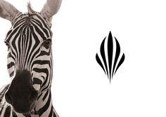 Zebra inpired logo by Glazer for african luxury hotel Sankara (精美物品的部分元素的选取可以参考为自己的原素)