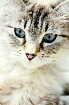 Gorgeous kitty!