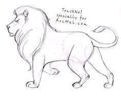 How to draw a lion step by step 4: