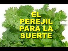 PON PEREJIL EN UN VASO DE AGUA, Y MIRA LO QUE SUCEDE !!! - YouTube