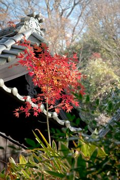 """hashitaka:  """" zen temple Engaku-ji  """""""