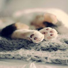 paws (by liz.rusby)