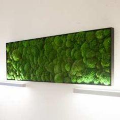Pflanzenbild aus konserviertem Kugelmoos 21x91cm - 1