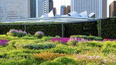 Lurie Garden Chicago | Piet Oudolf
