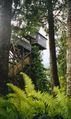 Sleep in a tree house