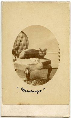 Sweet black kitty - Munjo