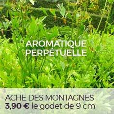 10 perpetual or perennial vegetables for a sustainable and autonomous vegetable garden Geranium Vivace, Permaculture, Perennial Vegetables, Plantation, Garden Planters, Horticulture, Vegetable Garden, Shrubs, Gardening Tips