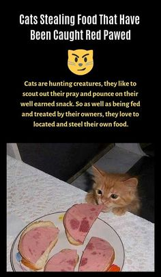 Cats Stealing Food That Have Been Caught Red Pawed - Viral Content Feed Hard Rock, Hip Hop, Blues, Beautiful Henna Designs, Viral Trend, Sarcasm Humor, Love Wallpaper, Nature Animals, Funny Pranks
