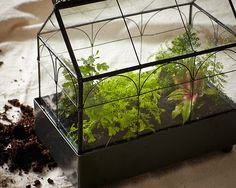 Create your own closed terrarium.