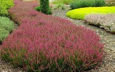 Afbeeldingsresultaat voor tuin