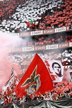 Ser Benfiquista a SÉRIO acima de tudo e mais alguma coisa... Football Fans, Football Players, Big Love, First Love, Benfica Wallpaper, Portugal Soccer, Ultras Football, Fun Comics, The Wiz