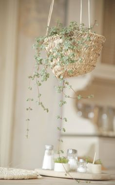 une idée déco : suspendre des plantes vertes, des succulentes dans un panier en…
