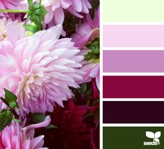 dahlia palette- the most beautiful colors! Colour Pallette, Colour Schemes, Color Patterns, Color Combos, Design Seeds, Color Bordo, Palette Design, Color Balance, Color Swatches