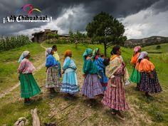 TURISMO EN BARRANCAS DEL COBRE. La Sierra Tarahumara, ubicada al suroeste del estado de Chihuahua, es una región de 65 mil kilómetros cuadrados, conformada por una cadena de montañas y barrancas cuya altitud varía de los 0 a 2,800 metros sobre el nivel del mar. Es el hogar de cuatro etnias indígenas: Rarámuri ó Tarahumaras, O'obas ó Pimas, Guarojío y Ódames ó Tepehuanes. Le invitamos a conocer estos interesantes lugares en el estado más grande de México. #turismoenchihuahua
