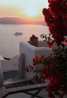 Bougainvillea and Sunset in Santorini Greek Island, Cyclades, Greece