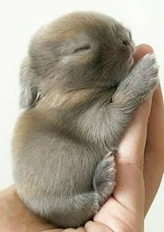 What a cute baby bunny
