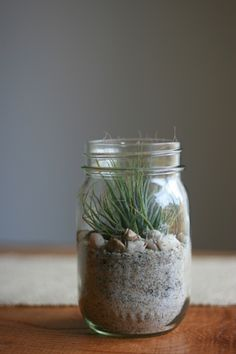 airplant in mason jar