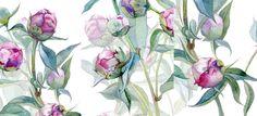 https://www.behance.net/gallery/21723933/Peonies-Watercolor