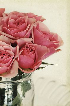 Rose colored Roses I love Flowers roses Roses Love Rose, My Flower, Pretty Flowers, Flower Art, Pink Roses, Pink Flowers, Coming Up Roses, Colorful Roses, Paperclay