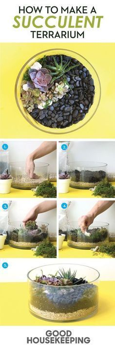 DIY your own succulent terrarium garden by layering sand, soil, and stone.