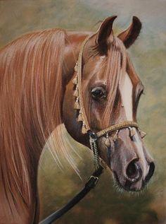 horse by PASTELIZATOR.deviantart.com on @deviantART