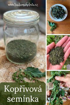 My Secret Garden, Korn, How To Dry Basil, Herbalism, Health Fitness, Herbs, Nature, Herbal Medicine, Naturaleza