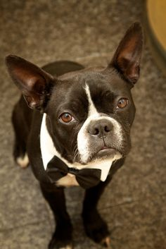 The most handsome groomsman.