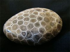 """The Petoskey stone was born as coral approximately 400 million years ago, when a shallow sea covered Michigan. Over time, the coral fossilized and now washes up on beaches and peeks through road grades across Northwest MI. Legend has it that the stone was named after Chief Pet-o-se-ga, whose name meant """"rays of rising sun."""" It makes sense: the Petoskey stone's interconnecting patterns look like little sunbursts."""