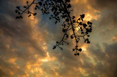 sunset sky silhouette