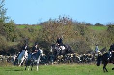 Eastwood at the Opening Meet 2018 of the Grallagh Harriers. Cross Country Jumps, Beach Rides, Chunky Monkey, Horses For Sale, Day Off, Equestrian, Ireland, Hunting, Meet