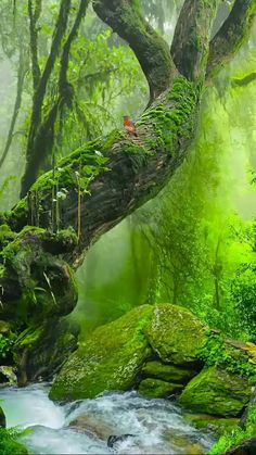 Pare!! Aprecie a Beleza que sentimos na Natureza..ela é Divina.