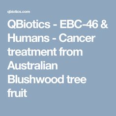 QBiotics - EBC-46 & Humans - Cancer treatment from Australian Blushwood tree fruit