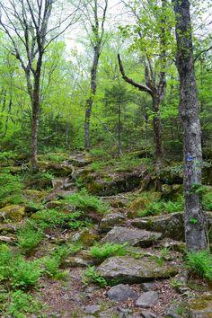 Hudson Valley Hiking: Black Head Mountain
