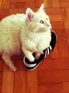 Cirilo <3 tênis do pai