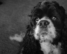 Dog Photography. See more at Instagram Lydia_knoop.