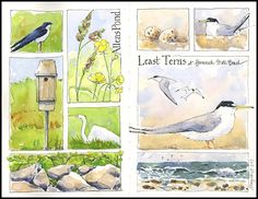 How great it is to be sketching and painting outside again! Birds nesting, feeding, soaring, chattering, resting, flying up and landing again. Flowers blooming, waves breaking, wind blowing. It's a…