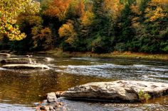 On the banks of the Clarion River... Cook Forest State Park, Pennsylvania. Would go there every autumn with my mum and dad to see the colors of the trees.