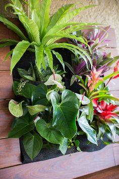 Vertical gardening with tropical plants  http://www.singinggardens.com/custom-garden-decor/