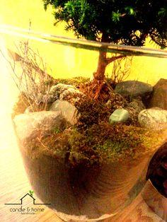By Candle and Home..  instagram.com/candleandhome   #urbangarden #urbangardening #plant #plants #terrarium #teraryum #handmade #diy #home #homedecoration #deco #art #design #decoration #indoorgardening #turkey #türkiye #earth #moss #microecosystem #ecosystem #interior #love #candleandhome