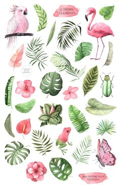 Flamingo parrot monstera hibiscus for in Watercolor Tropical Flowers Clipart. Flamingo parrot monstera hibiscus for in Tropical Flowers, Art Tropical, Tropical Birds, Exotic Flowers, Tropical Prints, Tropical Leaves, Tropical Design, Tropical Pattern, Tropical Animals