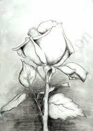 Resultado de imagem para drawing pencil flowers 3d
