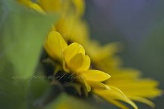 A moment of your life by LightSpectral | Ismanah photography, via Flickr