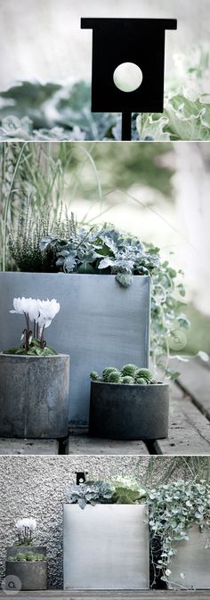 Really like the simple geometric forms in pots . . succulents . . cacti . . simple green leaves .