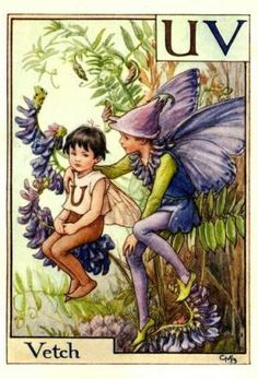 Alphabet Fairies:  Vetch by Cicely Mary Barker