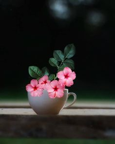 Wallpaper Nature Flowers, Flower Background Wallpaper, Beautiful Flowers Wallpapers, Beautiful Photos Of Nature, Flower Phone Wallpaper, Flower Backgrounds, Pretty Wallpapers, Beautiful Images, Beautiful Pictures Of Flowers