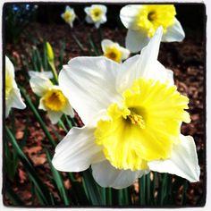 Spring in the ATL