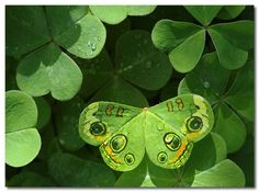 Shamrocks with butterfly....#Repin By:Pinterest++ for iPad#