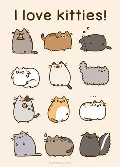 real life pusheen - Google Search